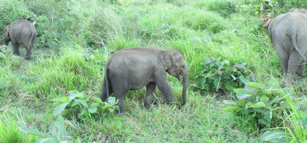 Baby elephant spotted during a jeep safari in Minneriya National Park, Srilanka