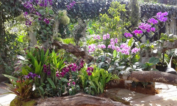 Philippine orchid events for Landscaping plants in the philippines