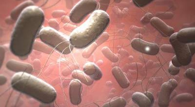salmonella food borne illness paper Foodborne illness short answer questions complete answers to questions below: what is the infectious agent (pathogen) that causes this infectious disease for example, the name of the bacteria, virus, or parasite.