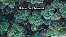 Quiz Time : Plant Transport