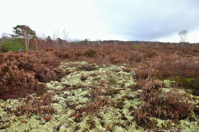 Lande de platière, Coquibus, Trois Pignons, Milly la Forêt