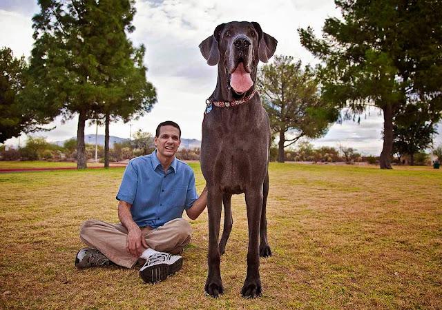 maior cachorro do mundo