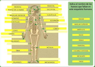 http://www.bromera.com/tl_files/activitatsdigitals/natura_6c_PA/natura6_cas_u02_pag23.swf