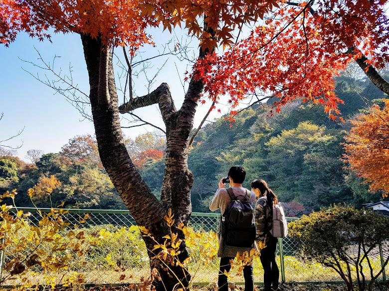 源氏山公園內,好天氣好秋色以及情侶 (?)