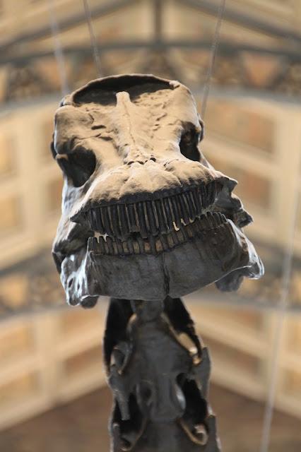londres, museo-de-historia-natural-de-londres