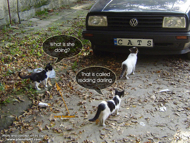 Cats Analysing a Car