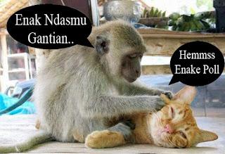 foto unik monyet dan kucing