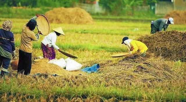 Produksi Pangan Diklaim Meningkat, tapi Impor Kok Nambah Terus?