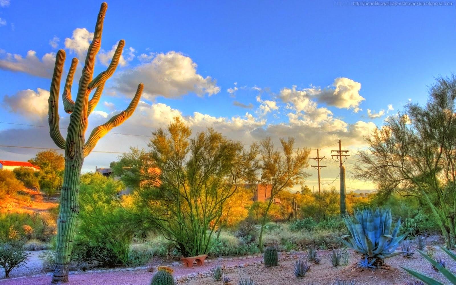 Arizona Iphone Wallpapers: Beautiful Wallpapers: Cactus Wallpapers