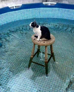 Cat stuck in water