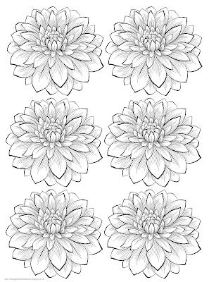 Gambar bunga dahlia 3