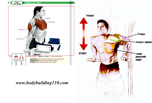 How to Train Chest & Avoid The 6 Biggest Chest Training Mistakes