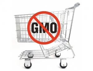 Although India does not produce any GM foods, in January of 2013,   they will begin requiring all imported GM foods to be labeled as GMO