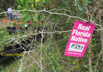 A Guest Post By Kari Ruder Owner Of Naturewise Nursery In Cocoa Fl Response To Monday S Supporting The Native Plant Industry