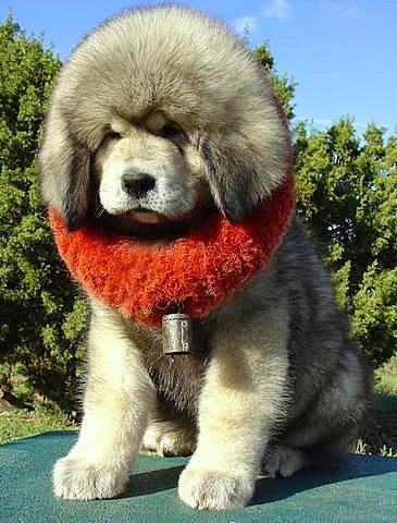 Cute Big Face Dog