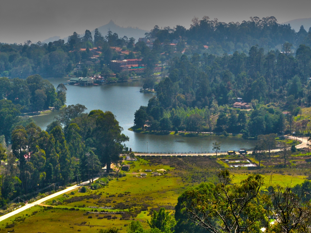 to the hills of kodaikanal The team planned to intensify seed collection after the flowering in 2006 and simultaneously plant saplings in the kodaikanal hills.
