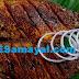 வௌவால் மீன் வறுவல் செய்முறை | Bash fish curry recipe !