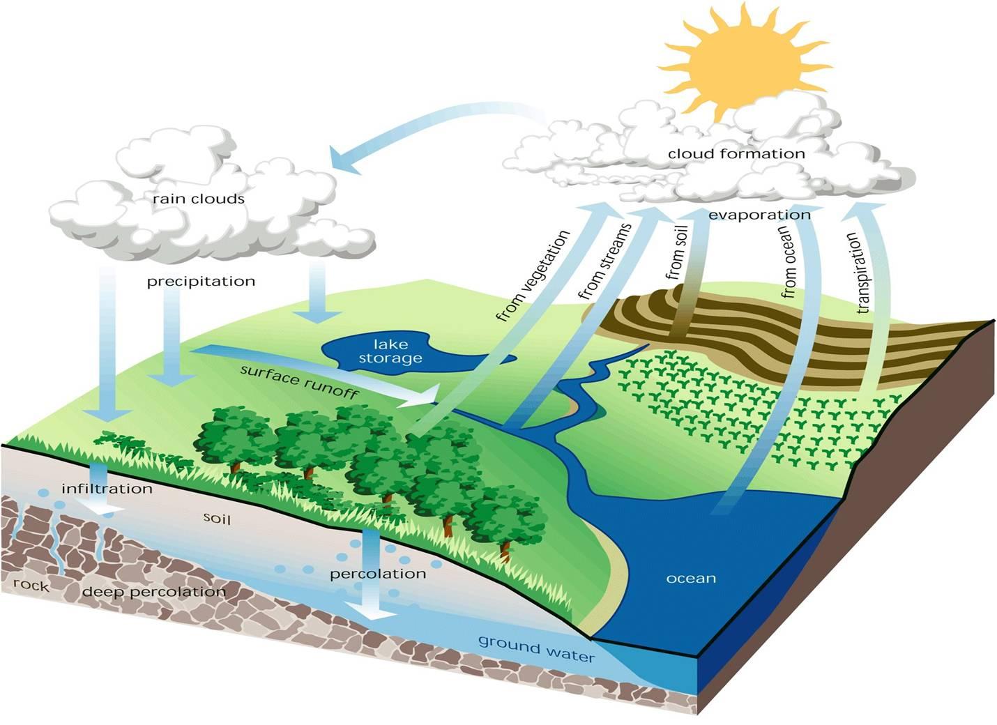 Fungsi Ekologis Hutan Tropika ~ Ghufrona's Notes