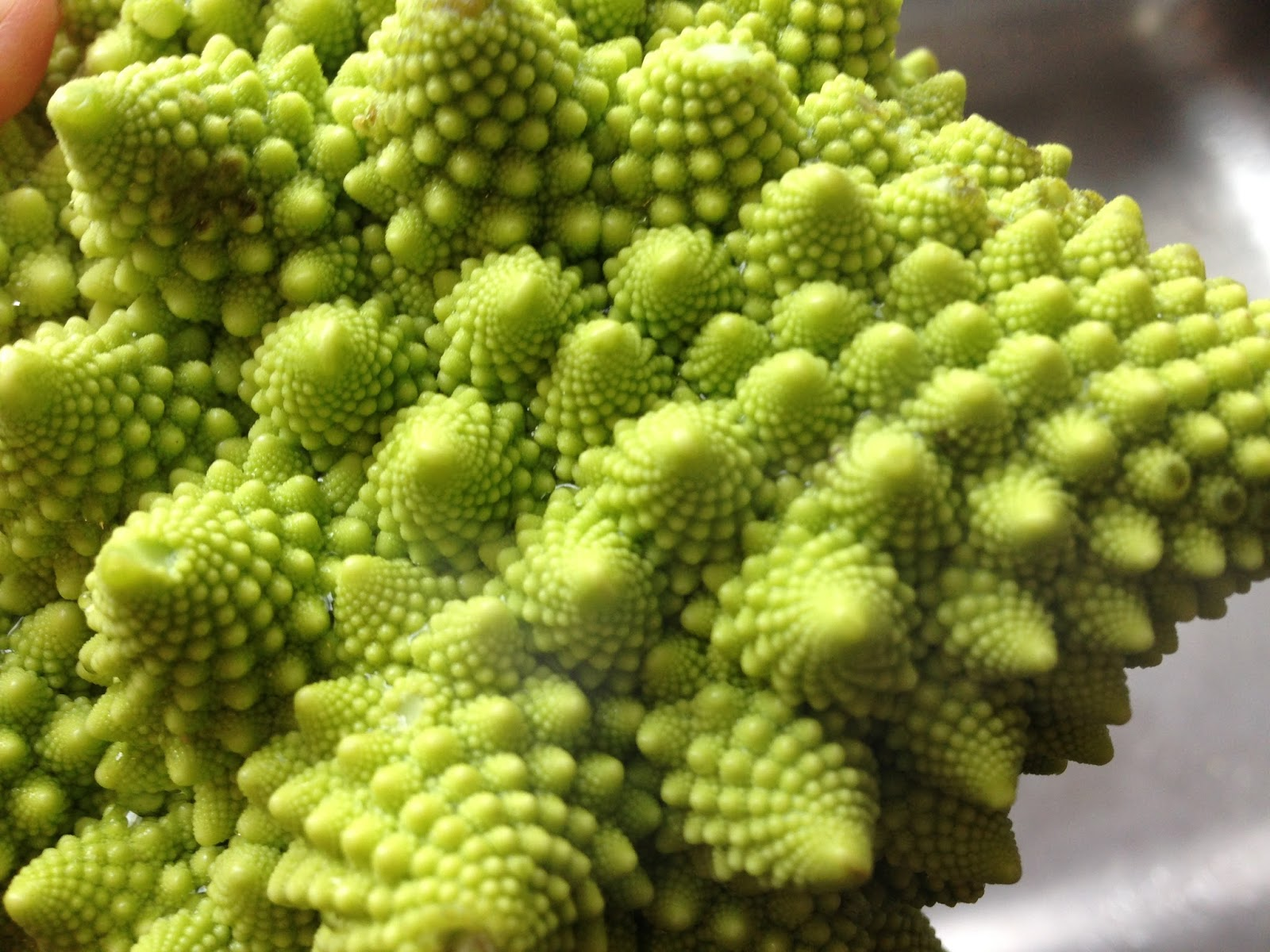 Romanesco Broccoli Can Dogs Eat