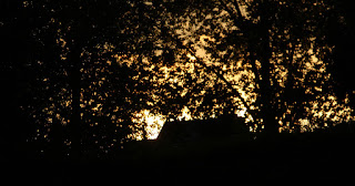 Some glimpse of a sunset through the trees. Nearly.