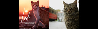 cat soundtracks-nine lives cats in istanbul soundtracks-kedi muzikleri-istanbulun kedileri muzikleri