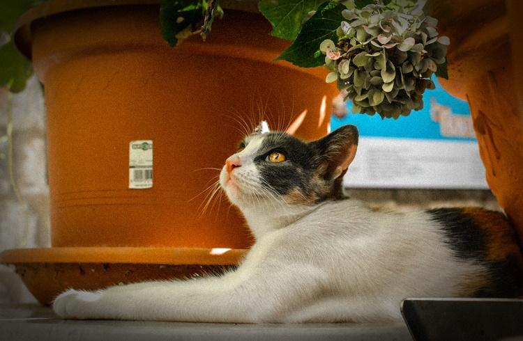 Foto de um gato olhando para o alto e plantas atrás dele