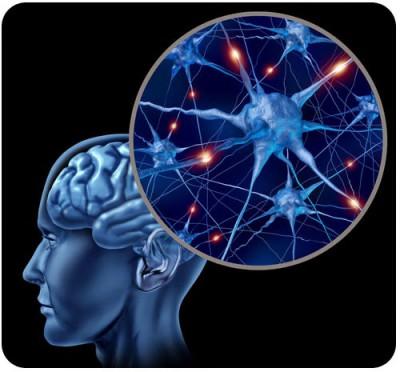 sel otak manusia,Tingkat Organisasi Kehidupan Pada Tubuh Organisme