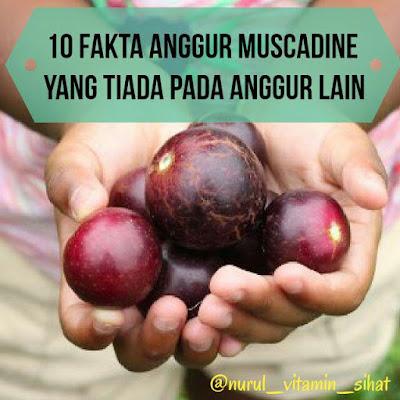 10 Fakta Anggur Muscadien Yang Tiada Pada Anggur Lain