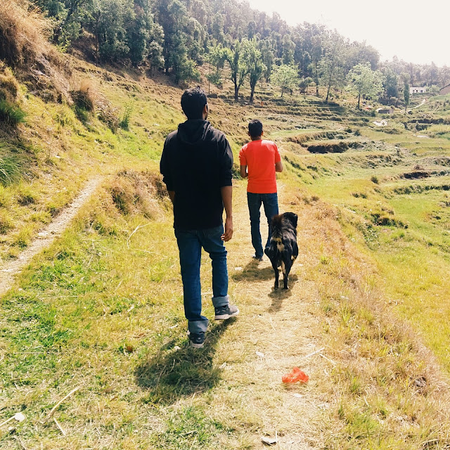 cool climate, greenery, warm people and many dogs