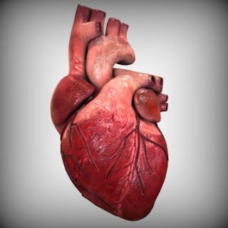 Symptoms and Remedies for Heart Disease