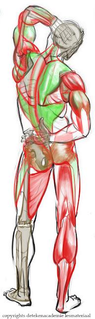 anatomie tekenen,tekenles,tekenen anatomie,tekenlessen