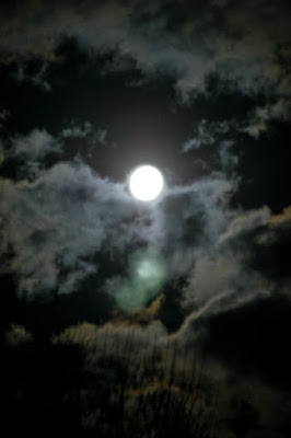 http://naturalgardening.blogspot.com/2010/11/full-moon-in-november.html