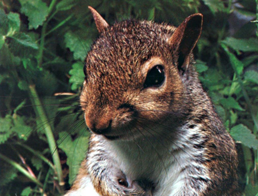 Download Wallpapers Free: Wild Animals Wallpaper