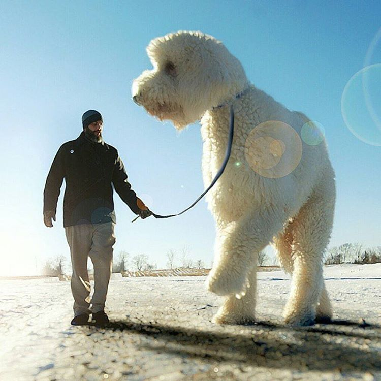 05-Flashback-Christopher-Cline-Juji-The-Giant-Dog-Photo-Manipulations-www-designstack-co