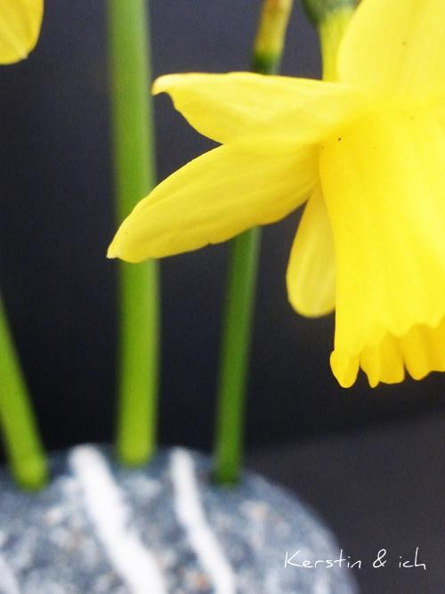 Großaufnahme gelbe Narzisse vor schwarzem Hintergrund in Steinvase