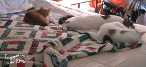 3 cats together on the bed