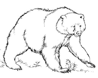 Gambar mewarnai beruang untuk anak - 10