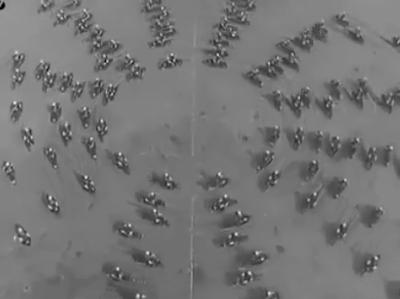 شاهد فيديو استعراض روعة بالدراجات البخارية عام 1935 - هل تصدق