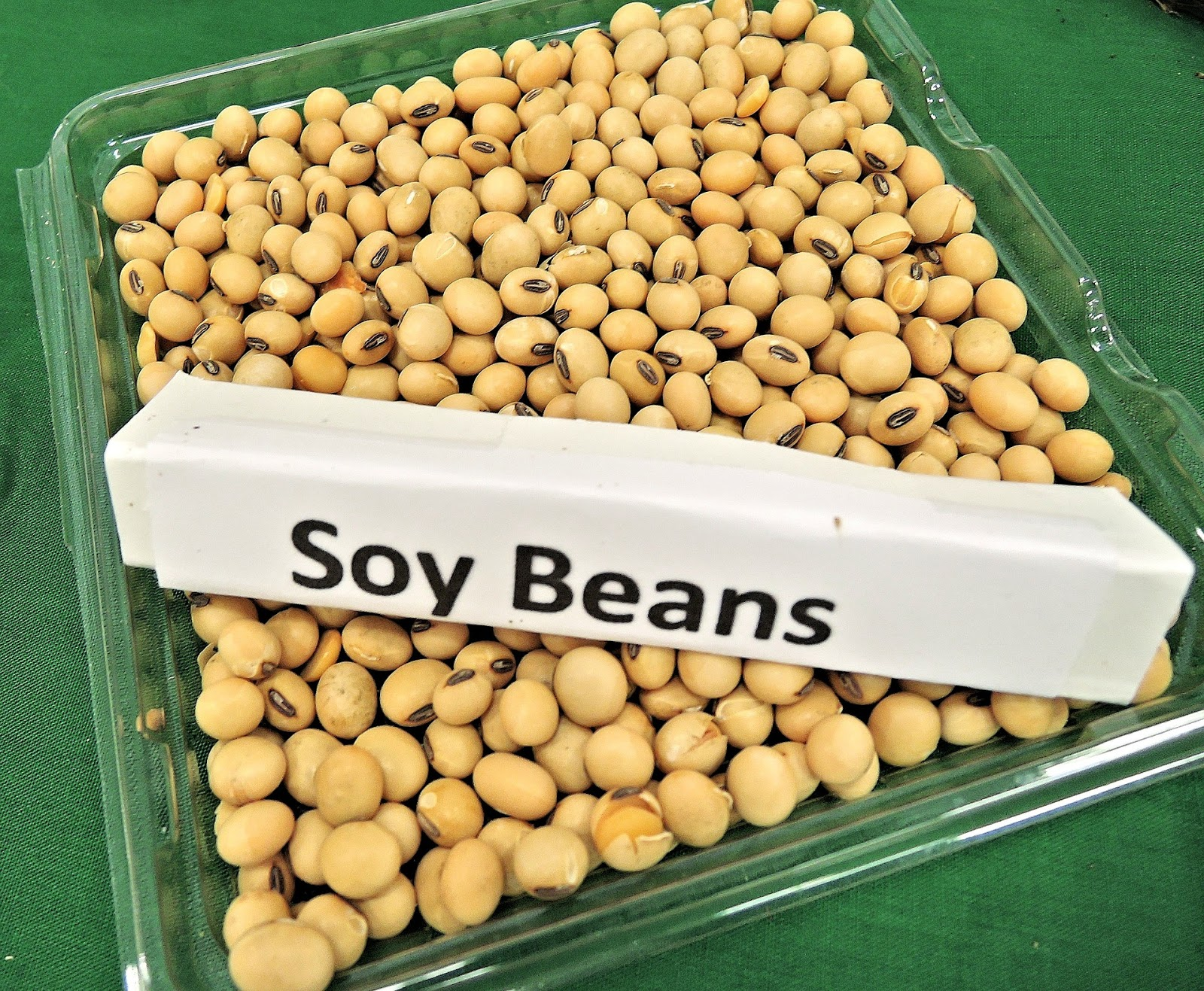 What is soy 66