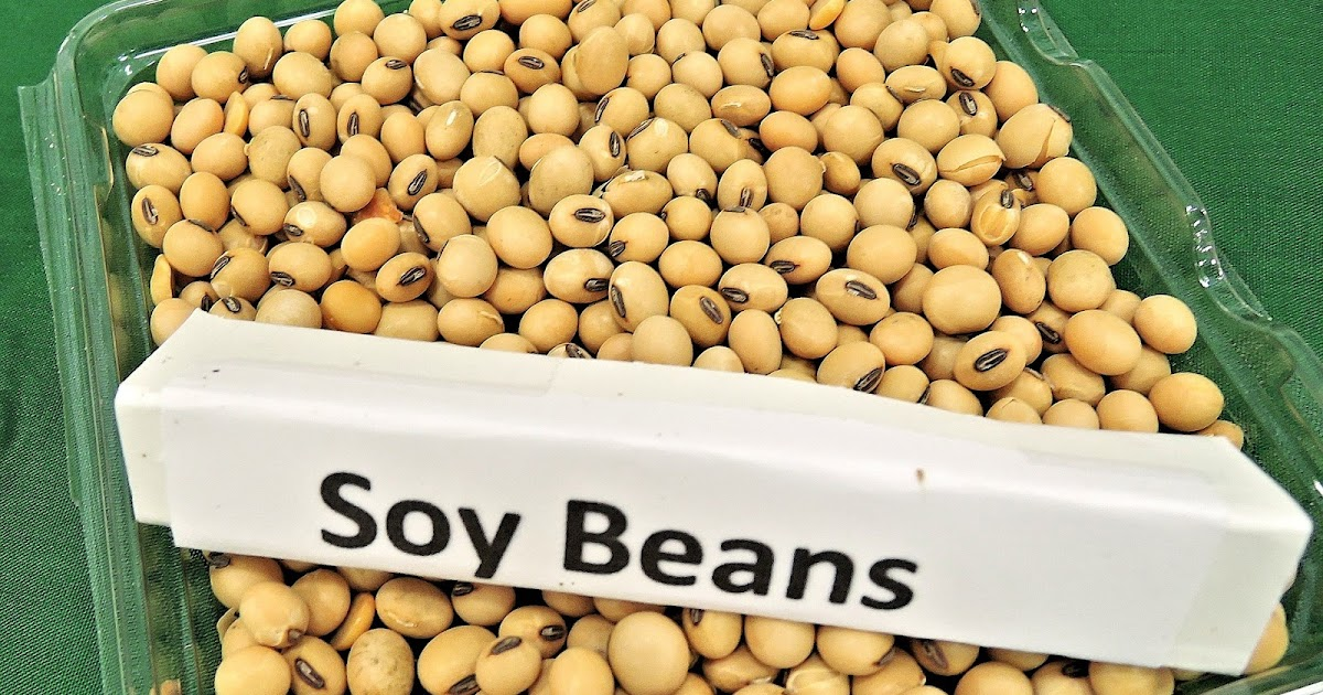 All About Soy: What Is It and Is It Healthy?