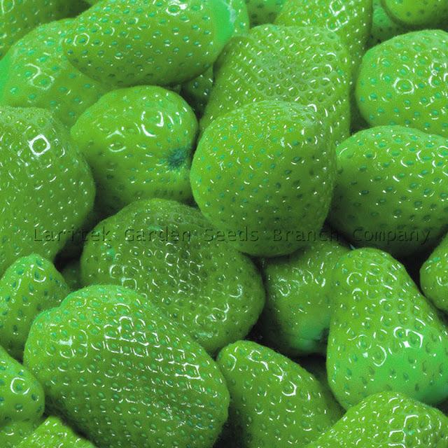 strawberry hijau yang nikmat dan lezat