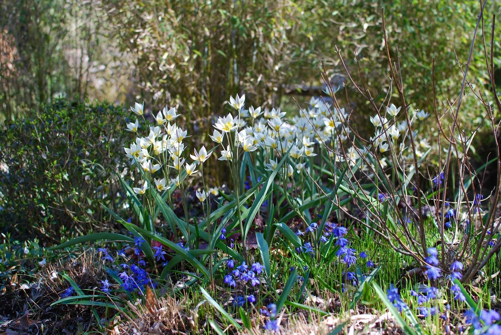 Almbacken: Trädgårdstid - en lisa för själen