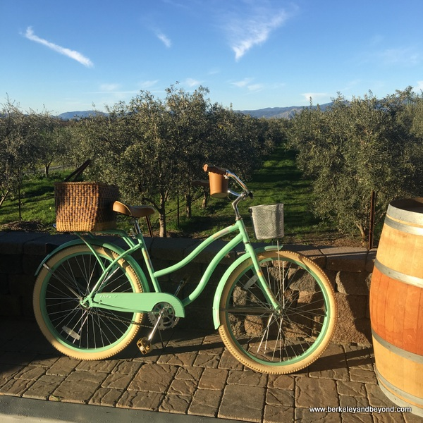 olive groves at Chacewater Winery and Olive Mill in Kelseyville, California