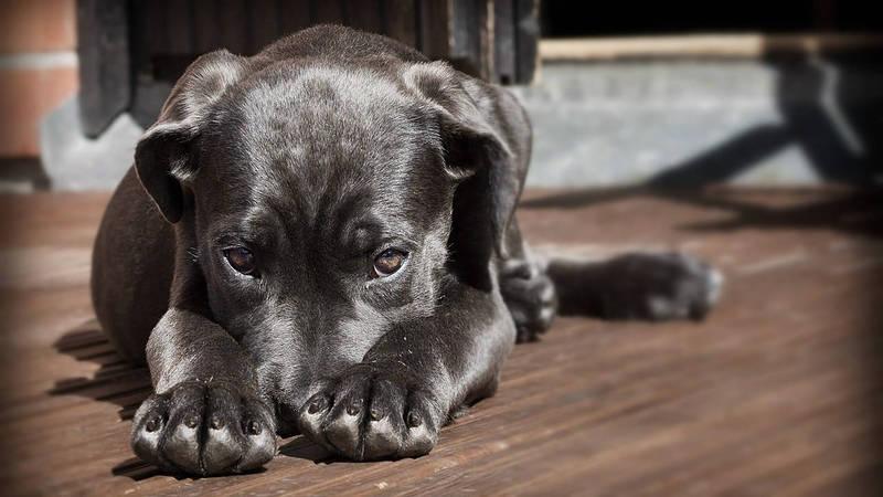 10 ενοχλητικά πράγματα που κάνεις στον σκύλο σου!
