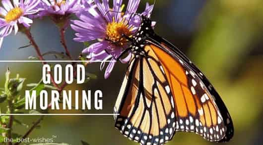 good morning flowers with butterfly butterflies monarch