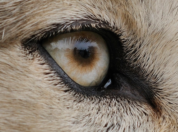 White Wolf : The incredibly detailed photos that reveal ...