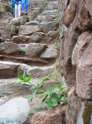 Planta muña, mal de altura, Perú, La vuelta al mundo de Asun y Ricardo, round the world, mundoporlibre.com