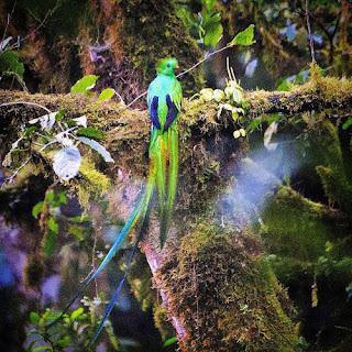 Los quetzales, como los ruiseñores, sólo aceptan  vivir en libertad y se mueren cuando los enjaulan.  ¿Cómo podría un quetzal, después de haber  conocido la libertad, vivir encerrado en  una jaula de metal?