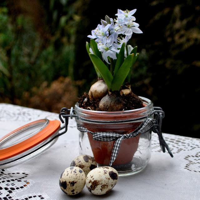 Zwiebelblumen im Weckglas