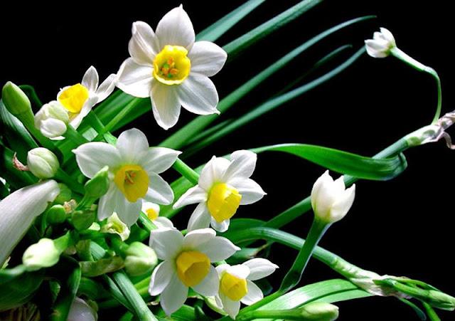 hoa thuy tien dep 5